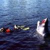 Horror in diving! :)