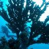 Crociera St John Reef by 4Sub