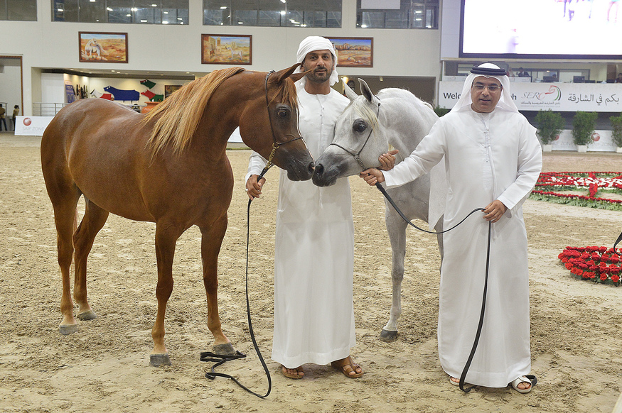 Sharjah Arabian Horse Festival, Straight Egyptian 2016