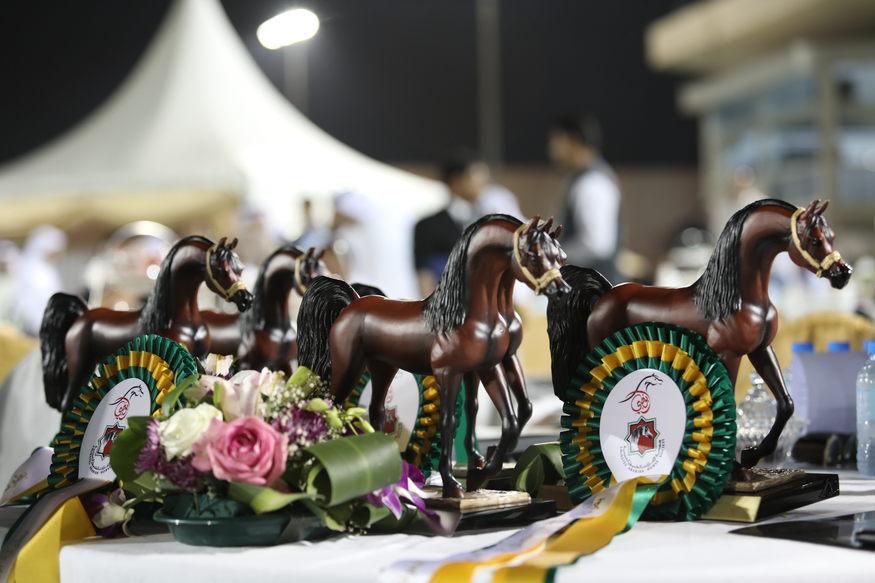 Abu Dhabi International Arabian Horse Championship 11-15 February 2017