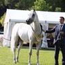 European Egyptian Horse Event - Dusseldorf 26th - 27th,Sep 2017