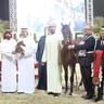 SHARJAH ARABIAN HORSE SHOW - UAE BRED