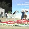 FUJAIRAH ARABIAN HORSE SHOW 14-18 DEC 2017