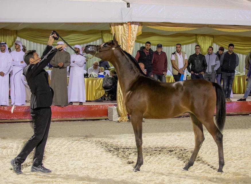 Abu Dhabi International Arabian Horse Show 2019