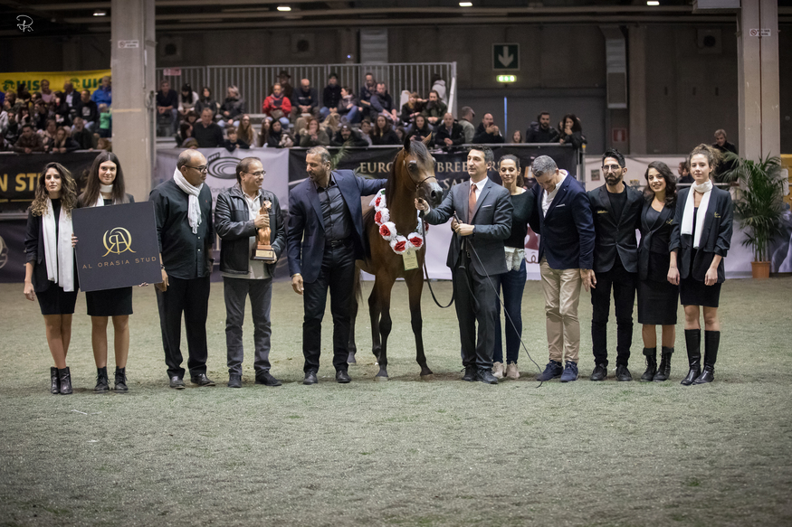 Verona Arabian Dream 2019