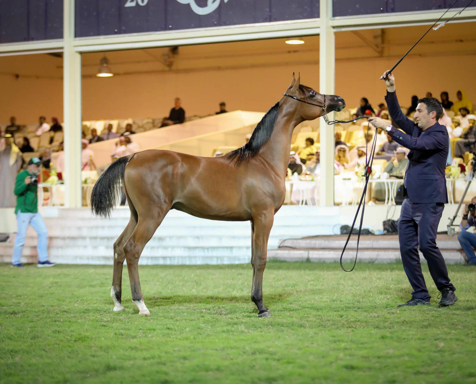 Ajman Arabian Horse Show 2020
