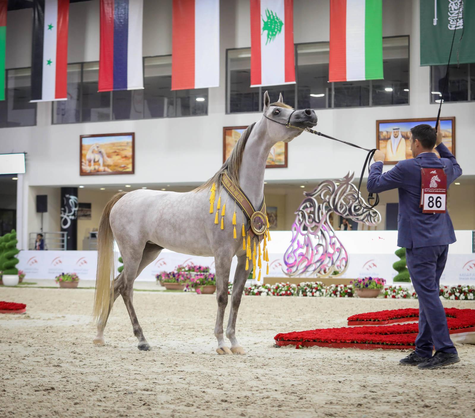Sharjah Arabian Horse Festival 2020