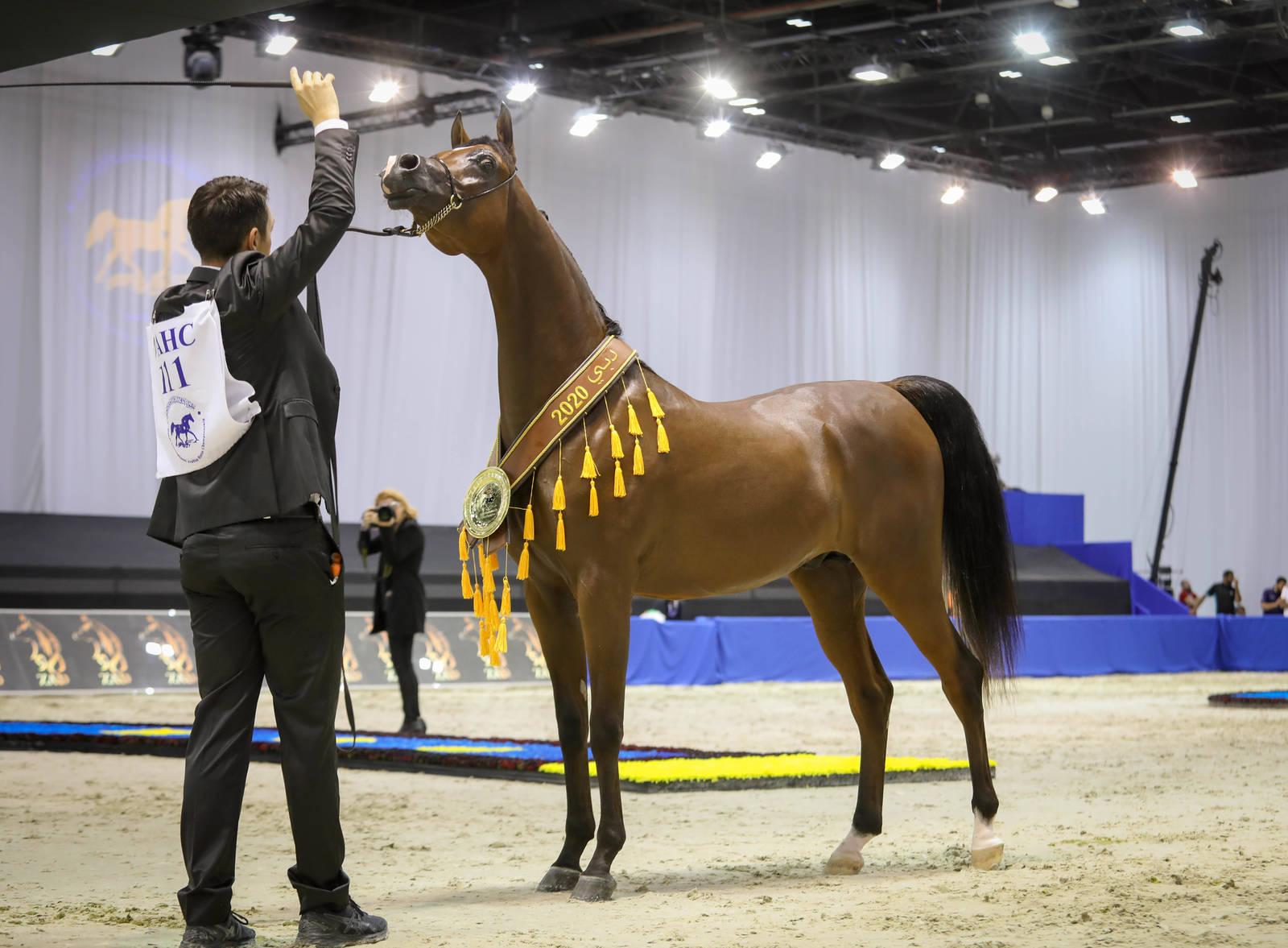 Dubai Arabian Horse Show 2020