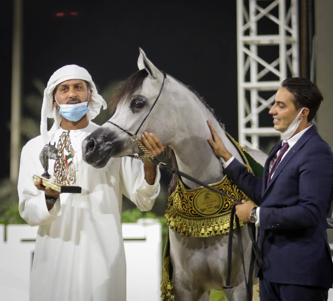 "SHARJAH ARABIAN HORSE FESTIVAL ""UAE BRED"" 2020"