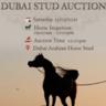 DUBAI ARABIAN HORSE STUD AUCTION 13/03/2021
