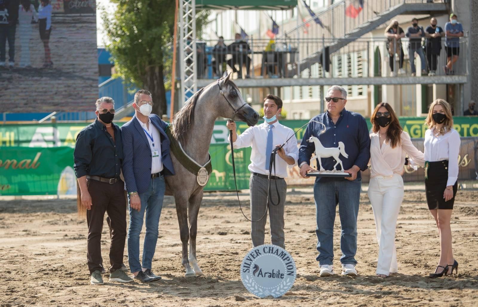 SPRING INTERNATIONAL ARABIAN HORSE SHOW 2021