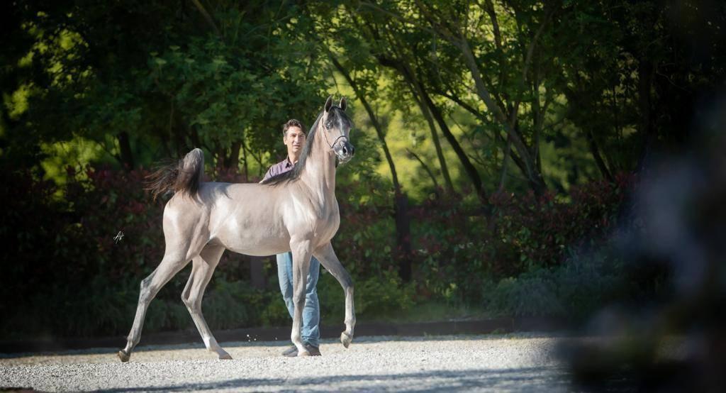 L'Arte del Cavallo Arabian Horse Show 2021