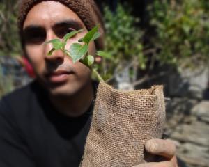 Bio-Degradable Grow Bags