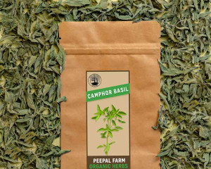 Organic Camphor Basil
