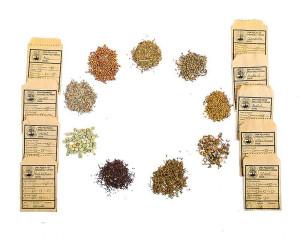 Organic Winter Seeds (Pack of 9)