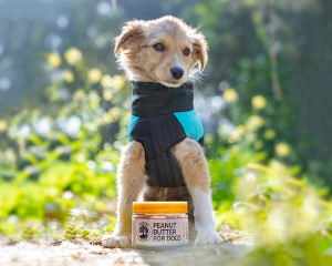 Peanut Butter For Dogs Pack Of 2 (250g each)
