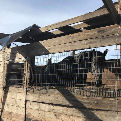 The Aftermath: How to Help Horsemen After Hurricane Michael