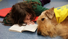 Read to a book-loving dog!