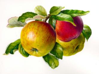 Master Gardeners: Growing Apples & Pears
