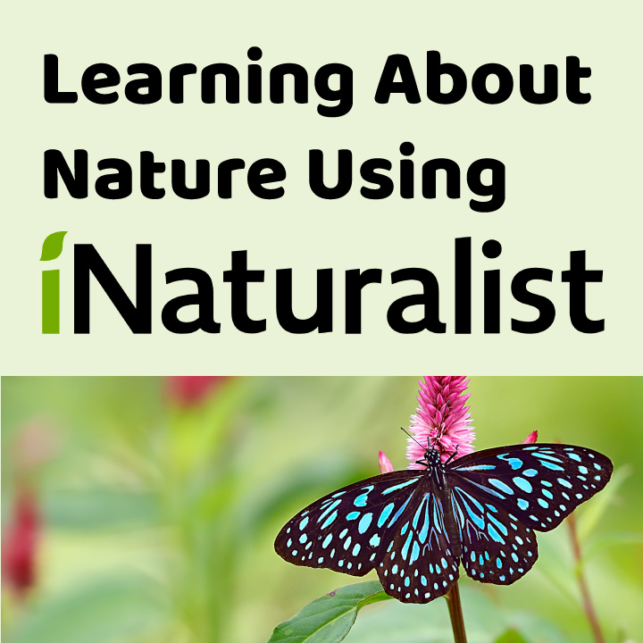 Learning About Nature Using iNaturalist