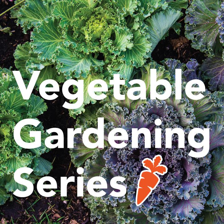 Vegetable Gardening Series: Planning a Fall Garden