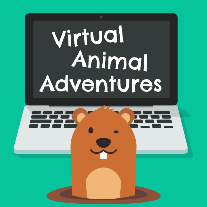 Virtual Animal Adventures: Groundhog
