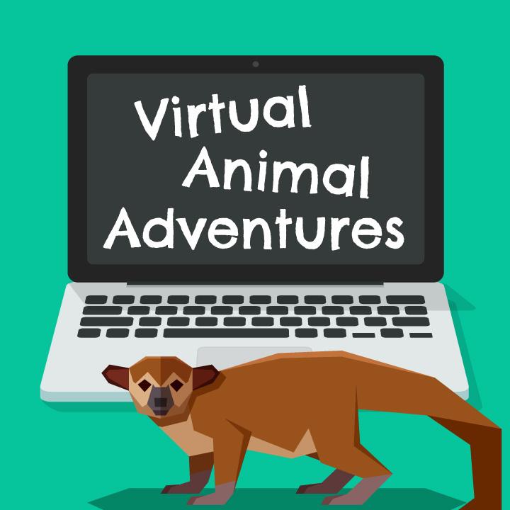 Virtual Animal Adventures: Kinkajou