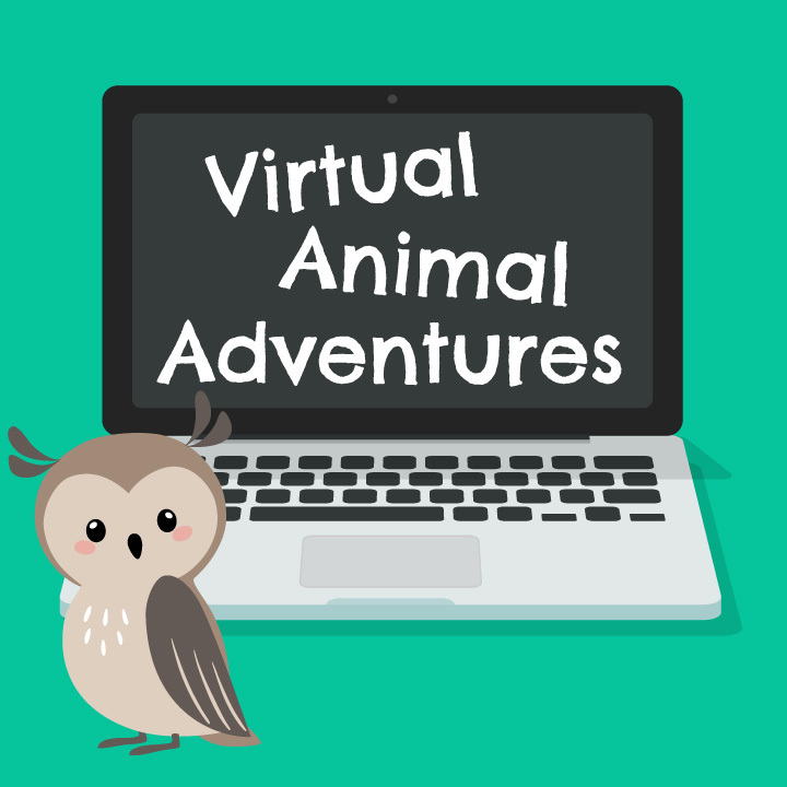 Virtual Animal Adventures: Owl