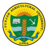 SRF Plant Breeding Jobs in Ludhiana - Punjab Agricultural University