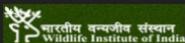 Project Associate/ Senior Biologist/ Research Biologist Jobs in Dehradun - WII