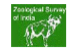 JRF/Post Doctoral Fellow Jobs in Kolkata - Zoological Survey of India