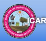 IT Officer / GIS Expert Jobs in Jodhpur - CAZRI