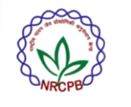 Research Associate/Project Manager Jobs in Delhi - NRCPB