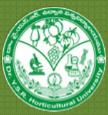 Assistant Engineer Electrical Jobs in Vijayawada - Dr YSR Horticultural University