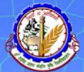 SRF Agricultural Engg. Jobs in Patna - Dr. Rajendra Prasad Central Agricultural University