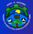 Contractual Teacher / Faculty Jobs in Jammu - SKUAST