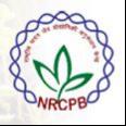 Research Associate Jobs in Delhi - NRCPB