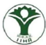 Research Associate/ Young Professional/ SRF/ JRF Jobs in Bangalore - Indian Institute Of Horticultural Research