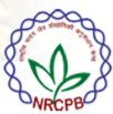 RA Biotechnology/SRF /Young professional Jobs in Delhi - NRCPB