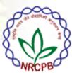 Young professional-I Jobs in Delhi - NRCPB