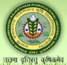 SRF ME Jobs in Bikaner - Swami Keshwanand Rajasthan Agricultural University