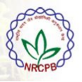SRF/Young profession al-I Jobs in Delhi - NRCPB