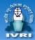 SRF Basic Science Jobs in Bangalore - IVRI