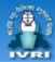 SRF/ Young Professional-II / JRF Life science Jobs in Bareilly - IVRI
