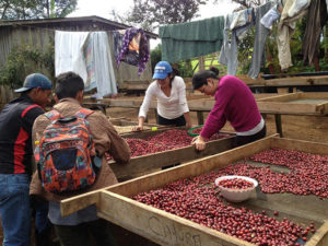 Local women and men sorting coffee cherries at the farm before heading to the local mill for processing