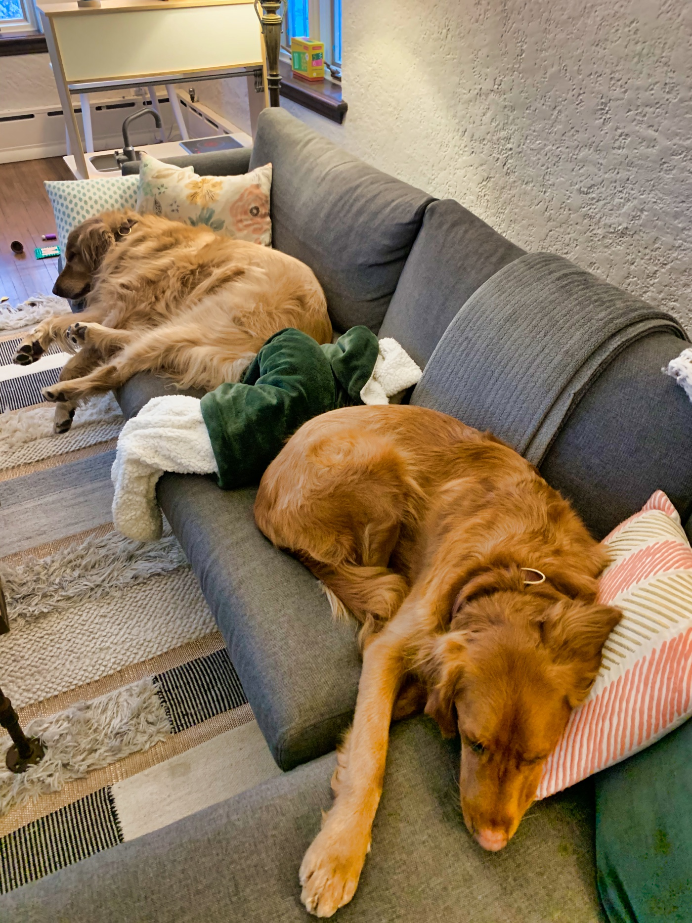 My two golden retrievers sleeping on the couch