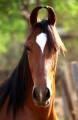 Индийските коне
