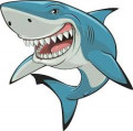sharks attack