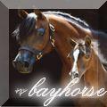 bayhorse