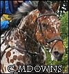 c_mdowns